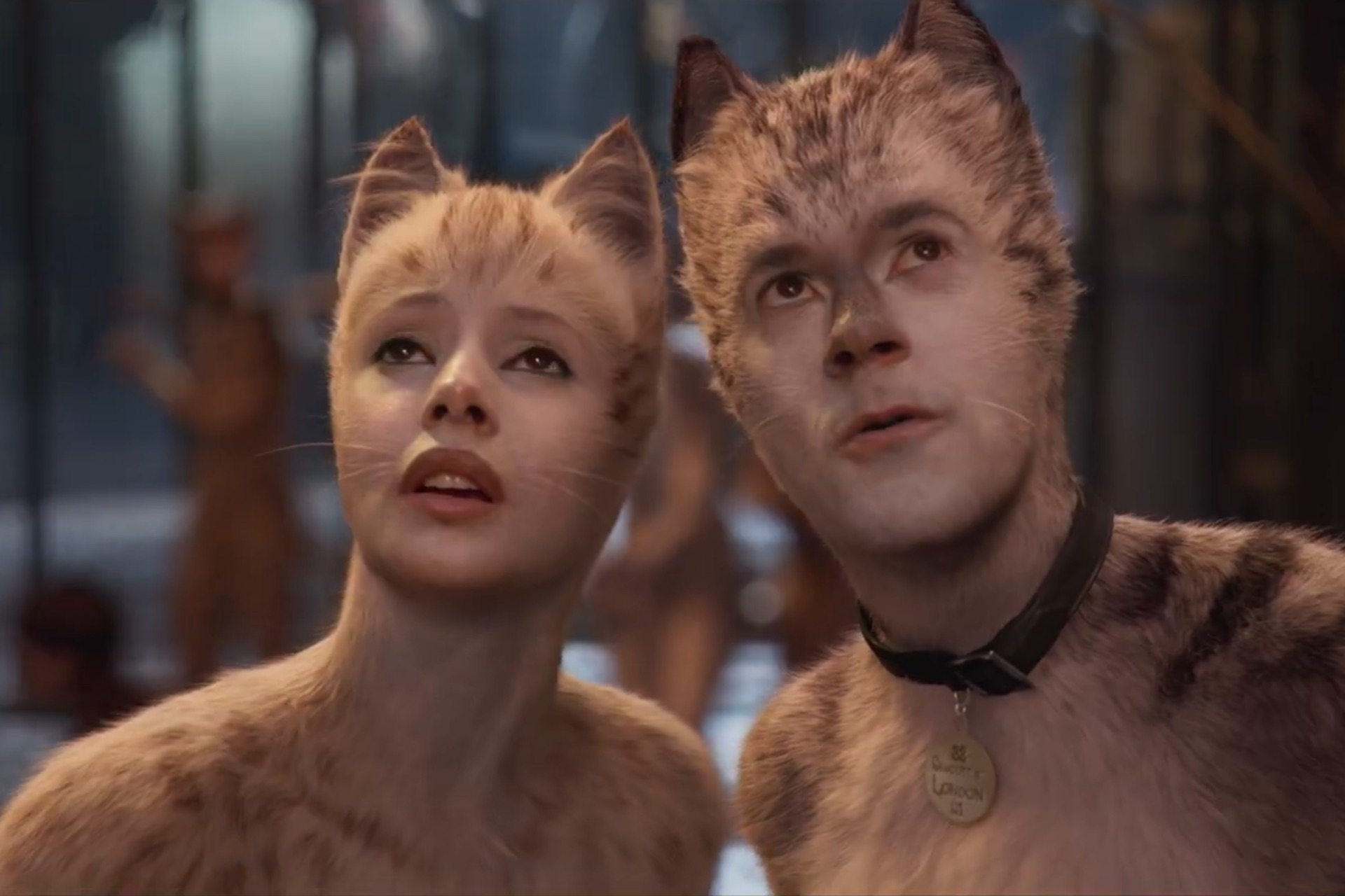 cats_review