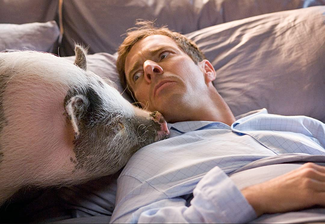 What's that pig doing on the bed?